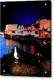 Wharf Gull Acrylic Print