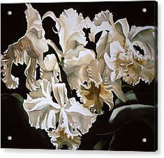 white Cattleya orchids Acrylic Print by Alfred Ng