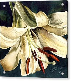 White Lily Acrylic Print by Alfred Ng