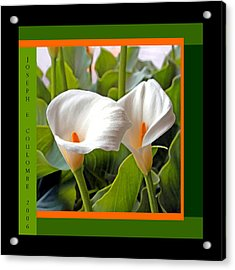 2 White Lily Flowers Acrylic Print
