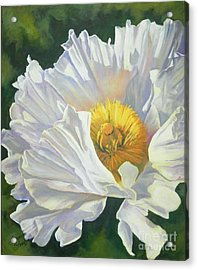 White Poppy Acrylic Print