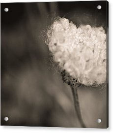 Acrylic Print featuring the photograph White Whisper by Sara Frank
