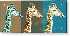 Wild Animal Stylised Pop Art Drawing Potrait Poser Acrylic Print