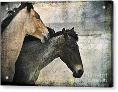 Wild Love Acrylic Print by Laura Marie Jones
