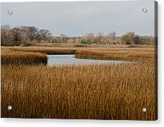 Winter Marsh Acrylic Print by Ed Waldrop