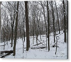 Winter Solitude Acrylic Print