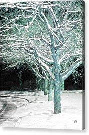 Winter Trees Acrylic Print by Guy Ricketts