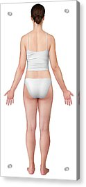 Woman Posterior View Acrylic Print by Qa International, Universal Images Group/science Photo Library