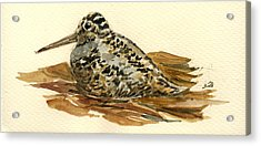 Woodcock Acrylic Print by Juan  Bosco