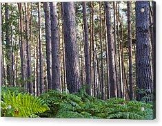 Woods Acrylic Print by David Isaacson