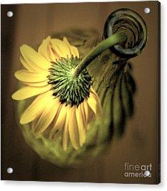 Yellow Acrylic Print by Amanda Barcon