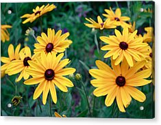 Yellow Daisy Flowers #2 Acrylic Print