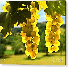 Yellow Grapes Acrylic Print by Elena Elisseeva