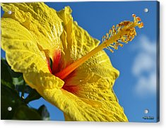 Acrylic Print featuring the photograph yellow Hula Girl Hibiscus by Aloha Art
