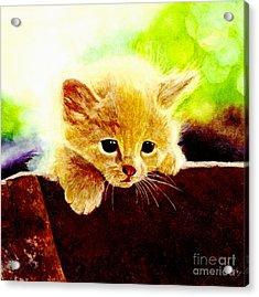 Yellow Kitten Acrylic Print