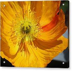Yellow Wonder Acrylic Print by Bruce Bley