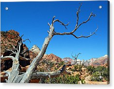 Zion Reaching Tree Acrylic Print