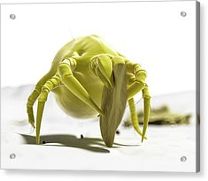 Dust Mite Acrylic Print by Sciepro/science Photo Library