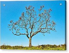 20150217115901fla24142c1p Acrylic Print