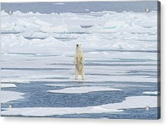 Norway, Svalbard Acrylic Print by Jaynes Gallery