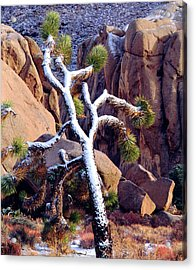 Usa, California, Joshua Tree National Acrylic Print