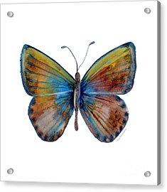 22 Clue Butterfly Acrylic Print by Amy Kirkpatrick