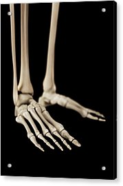 Human Foot Bones Acrylic Print by Sebastian Kaulitzki