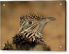 Usa, New Mexico, Bosque Del Apache Acrylic Print