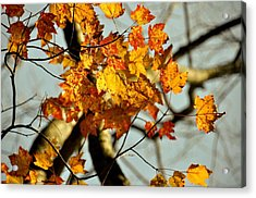 22nd Of September Acrylic Print by JAMART Photography