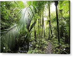 Jungle Acrylic Print by Les Cunliffe