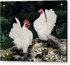 23. Pair White Serama Acrylic Print