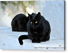Cat In Hydra Island Acrylic Print by George Atsametakis