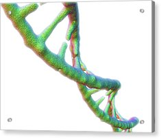 Dna Molecule Acrylic Print by Alfred Pasieka/science Photo Library