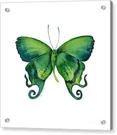 29 Arcas Butterfly Acrylic Print