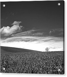 Agricultural Landscape Acrylic Print by Bernard Jaubert