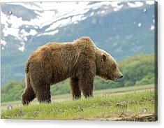 Alaska Wilderness Acrylic Print