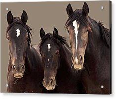 3 Amigos Sepia Wild Mustang Acrylic Print by Rich Franco