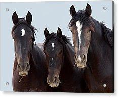 3 Amigos Wild Mustang Acrylic Print