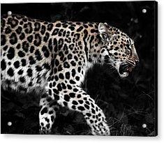 Amur Leopard Acrylic Print by Martin Newman