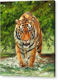 Amur Tiger Painting Acrylic Print by David Stribbling