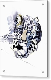 Arabian Leopard Acrylic Print by Mark Adlington