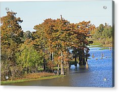 Atchafalaya Basin In Louisiana Acrylic Print