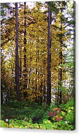 Autumn 5 Acrylic Print by J D Owen