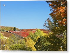 Autumn Colors In Maine Blueberry Field And Forest Acrylic Print by Keith Webber Jr