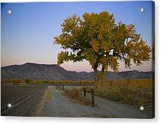Autumn Moonset Acrylic Print