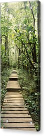 Bamboo Forest, Oheo Gulch, Seven Sacred Acrylic Print