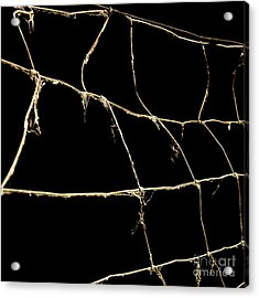 Barbed Wire Acrylic Print by Bernard Jaubert