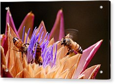 Bees In The Artichoke Acrylic Print