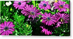 Blooms In Bloom Acrylic Print by JAMART Photography
