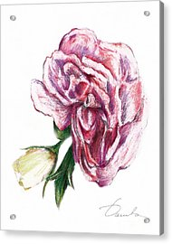 Blossom Acrylic Print by Danuta Bennett